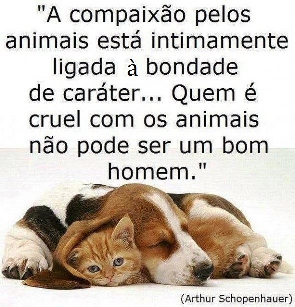 1363170439263 COMPAIXÃO.jpg