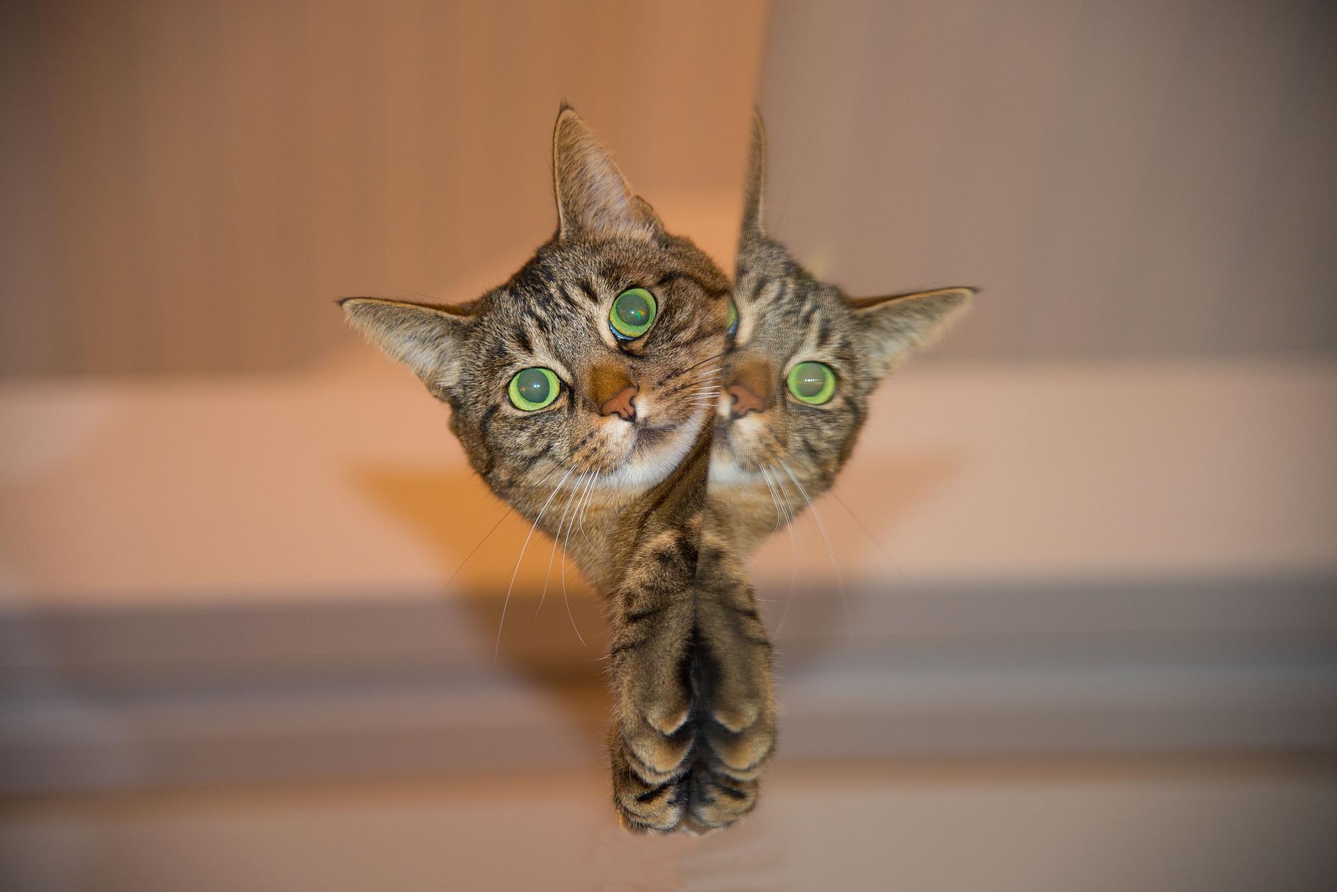 cat-697113_1920.jpg